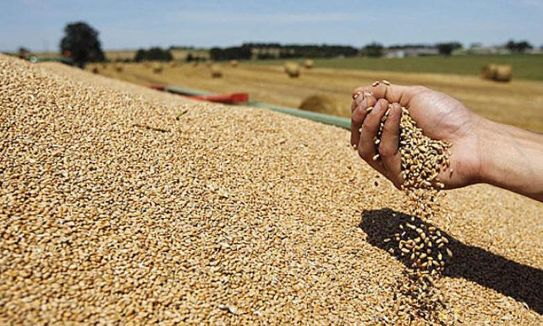 Le prix référentiel du blé rendu moulin fixé à 280 DH/quintal
