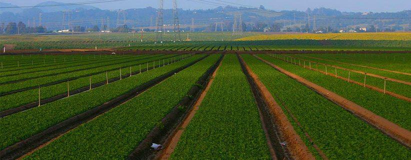 Budget post-Brexit : 365 millions d'euros pour la politique agricole de l'UE