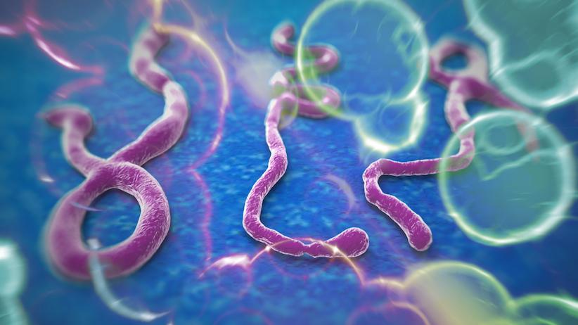 Le ministère de la Santé active le plan national de veille et de riposte au virus Ebola