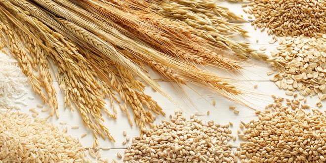 Céréales : Le Maroc et la France renforcent leur coopération technique