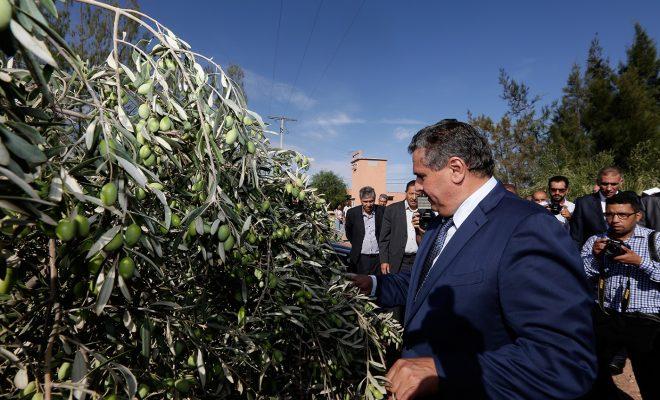 Akhannouch rassure à propos de la campagne agricole 2018-2019