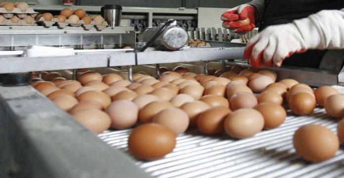 Chaque Marocain consomme 180 œufs par an