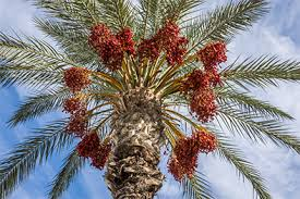 Le Sidattes, un rendez-vous annuel pour la promotion des produits oasiens