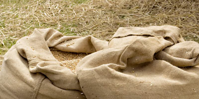 Campagne agricole 2018/2019 : 430.000 ha de céréales programmés dans l'Oriental