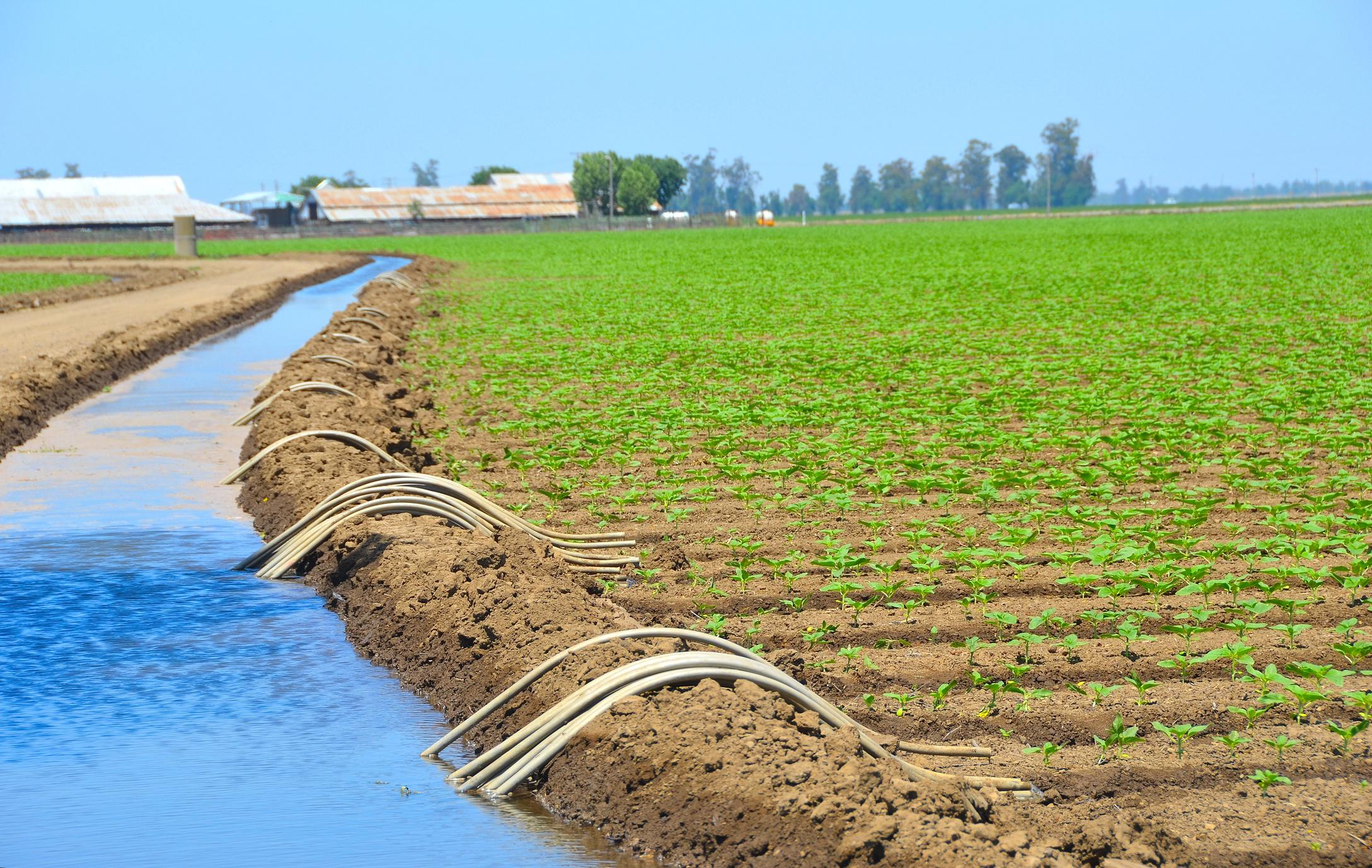 Maroc: Les niveaux d'irrigation boostent les récoltes