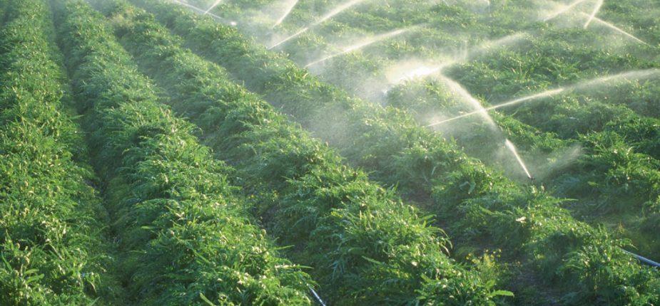Agriculture: L'AFD débloque plus de 200 MDH en faveur du Maroc
