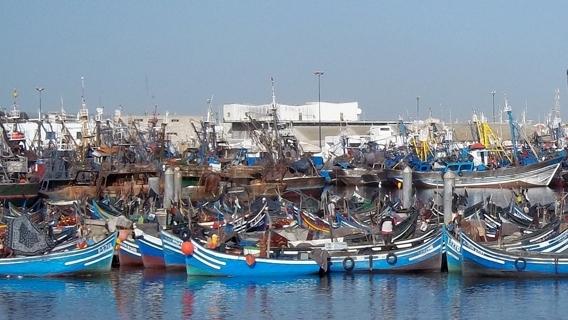 Pêche côtière : Léger recul des débarquements