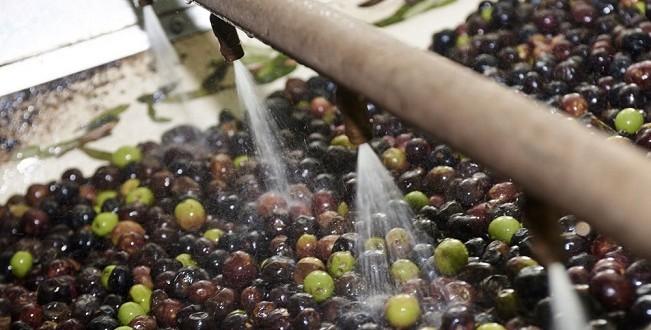 Taounate : Interdiction de huit unités de trituration d'olives