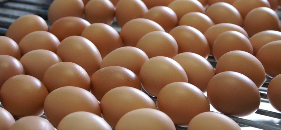 Production d'œufs: Les chiffres étonnants du secteur