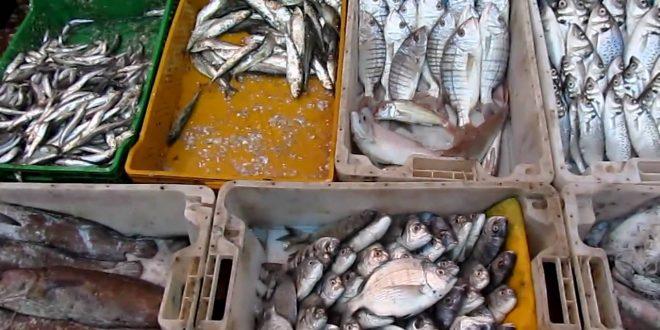 Pêche côtière : Stagnation des débarquements en 2018