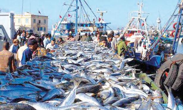 Pêche côtière et artisanale : Du poisson dans les filets