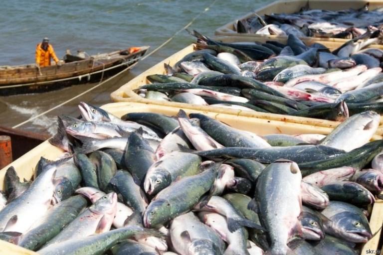 Pêche: Le Maroc va mettre en place un nouveau système de pesage des captures