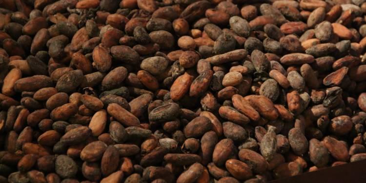 Le Ghana et la Côte d'Ivoire cesseront la vente du cacao pendant la saison 2020-2021