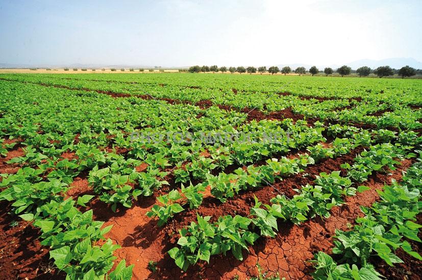 Conseil agricole : Le Groupe OCP lance l'applicaion @tmar