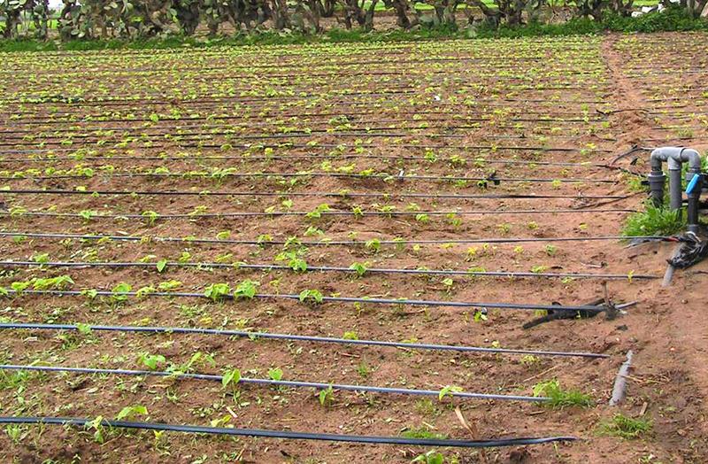 Agriculture : Retour à la hausse