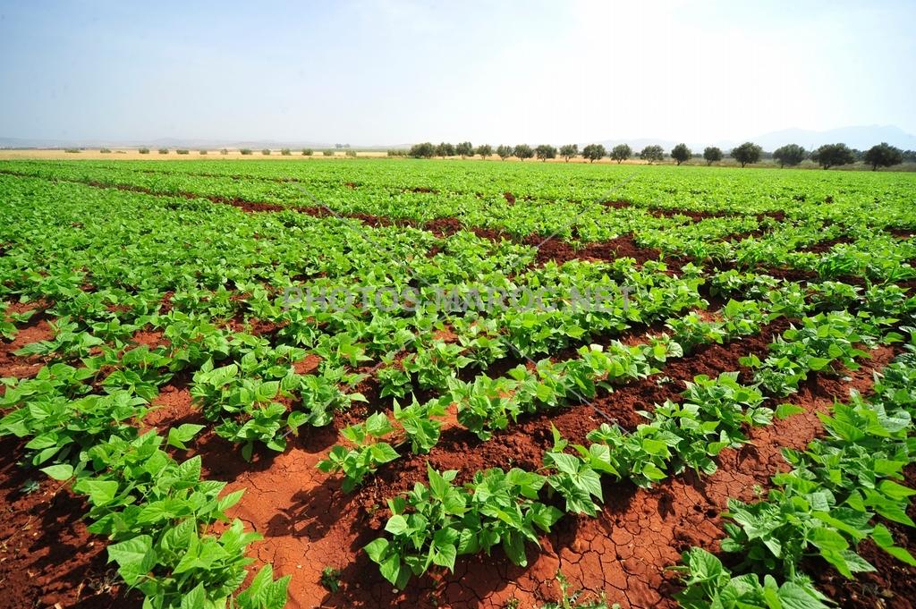 Assurance : Plus d'un milliard déboursé pour rembourser les agriculteurs