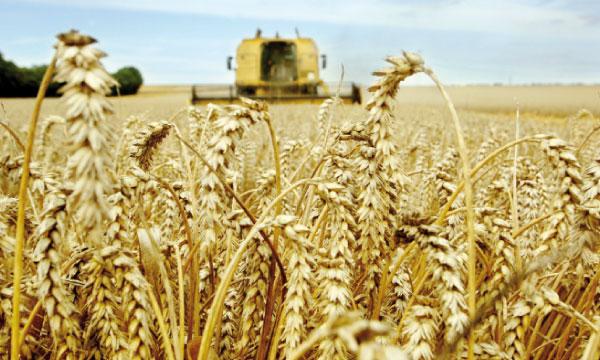 Campagne agricole : Akhannouch se frotte les mains